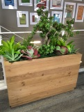 image of a wooden plant container of succulents on a office space