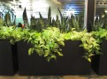 Rectangle Office planter with trailing plants Pothos Sansevieria