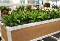 Plants in the workplace lemon lime custom wooden planter