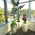 Decorative Office Plants Creative Design